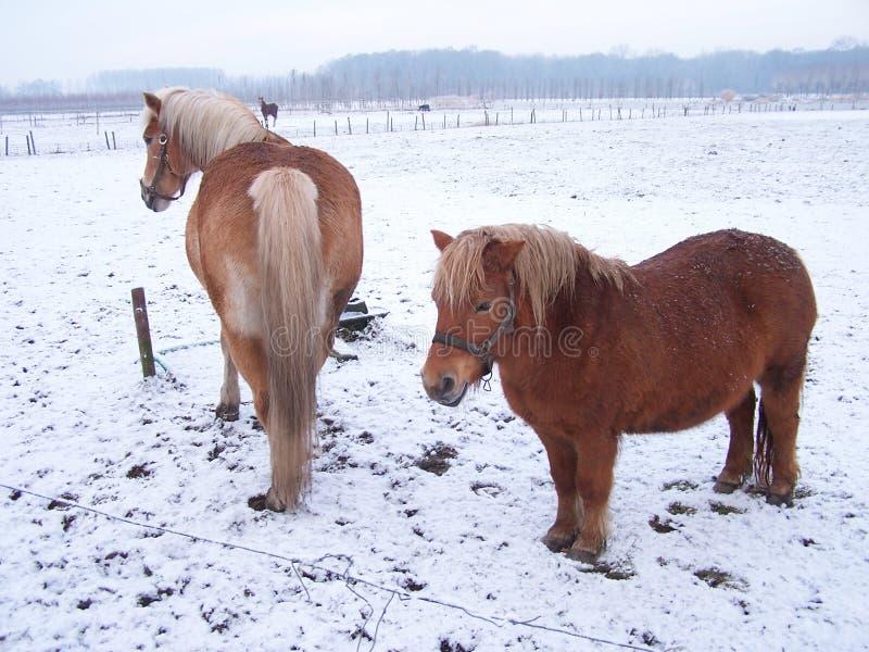 De winter in Holland 3 royalty-vrije stock afbeelding