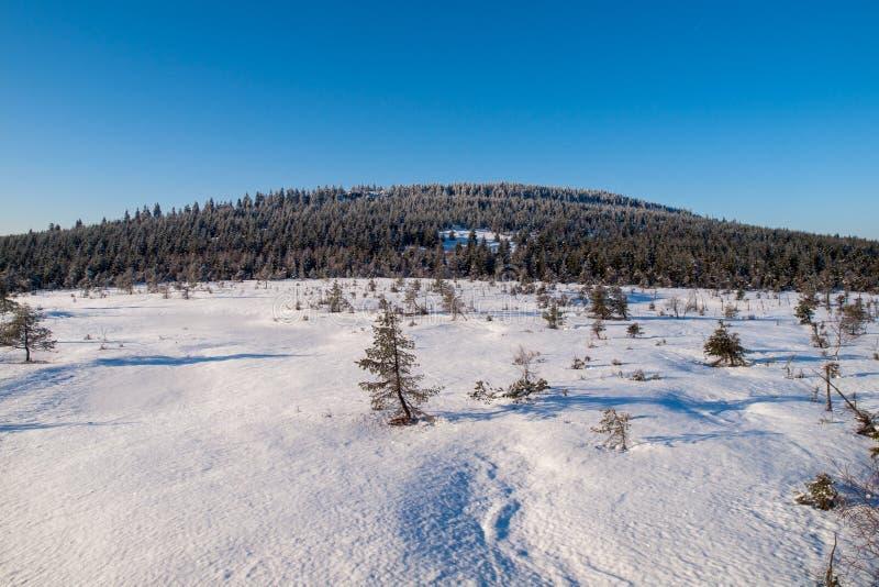 De winter in Jizera-Bergen dichtbij Cihadla-moerasland, Tsjechische Republiek stock fotografie
