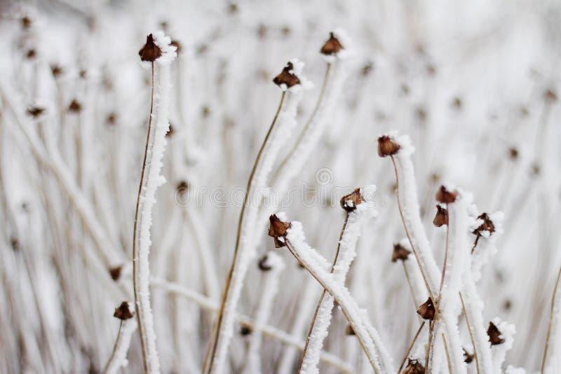 De winter magisch op installaties stock afbeelding
