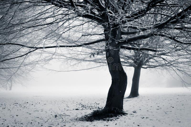 De winter - met een draai