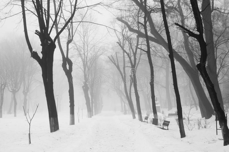 De winter mistig landschap stock afbeeldingen