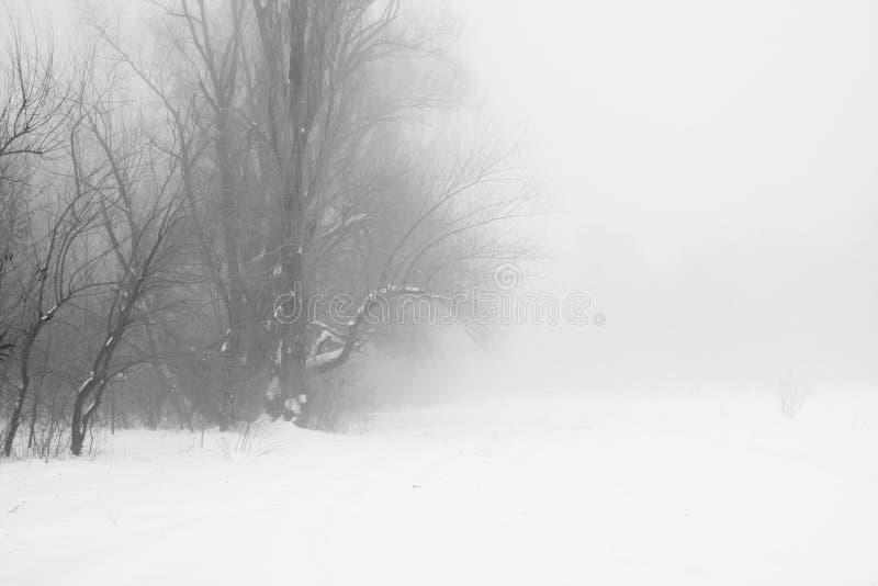 De winter mistig landschap in het park royalty-vrije stock afbeelding