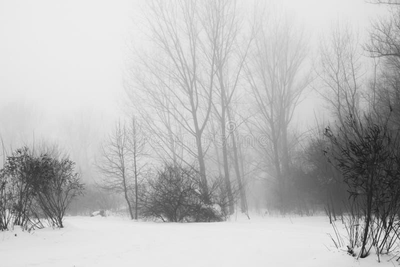 De winter mistig landschap in het park stock afbeelding