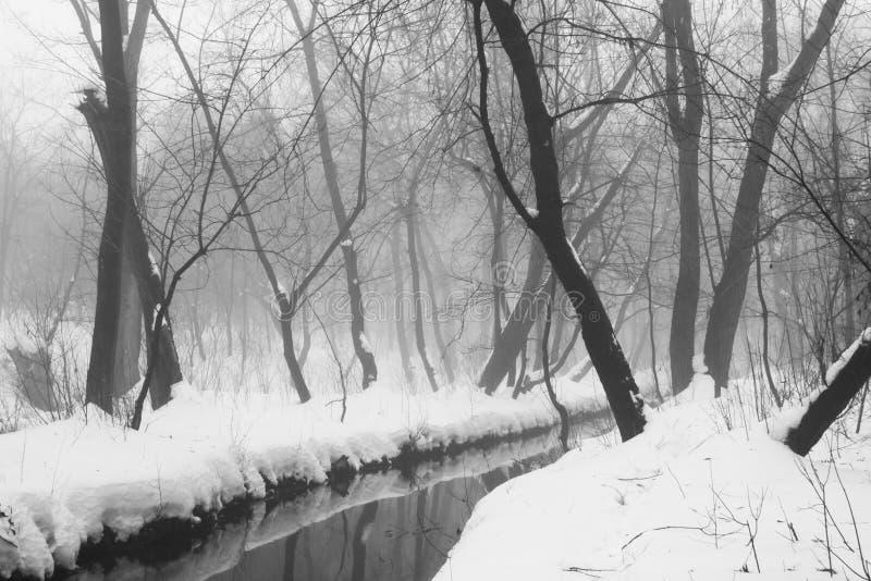 De winter mistig landschap in het park stock foto's
