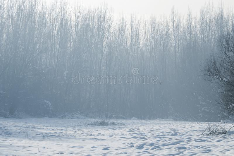De winter mistige bosscène, Koud mistig bos met sneeuw stock afbeeldingen