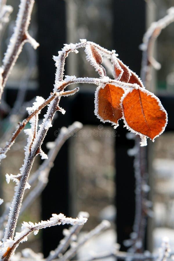 De winter nam toe royalty-vrije stock foto's