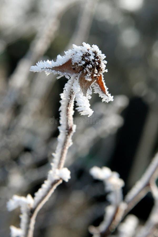 De winter nam toe royalty-vrije stock afbeeldingen