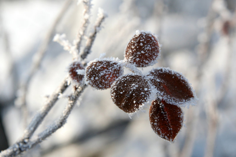 De winter nam toe stock foto