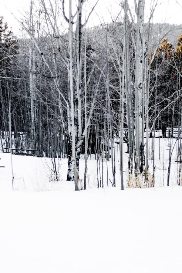De winter onder de bomen royalty-vrije stock foto's
