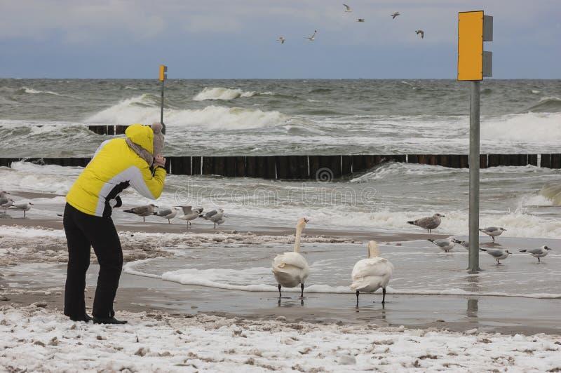 De winter op het strand stock fotografie