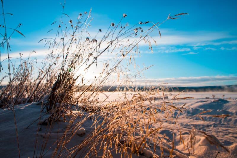 De winter over nevelig meer met gras in de voorgrond stock foto