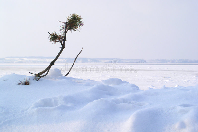 De Winter: Overleef Royalty-vrije Stock Afbeelding
