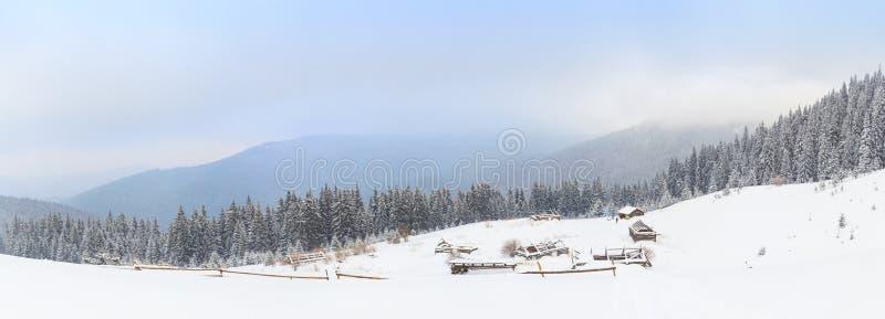 De winter, panorama, bos stock afbeelding