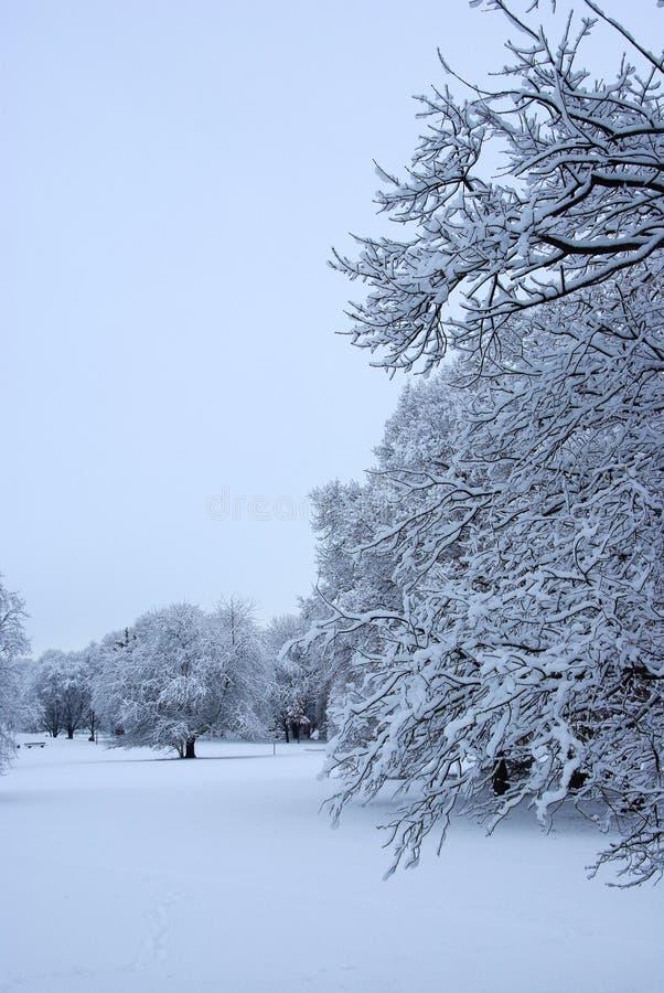 De winter in park stock foto