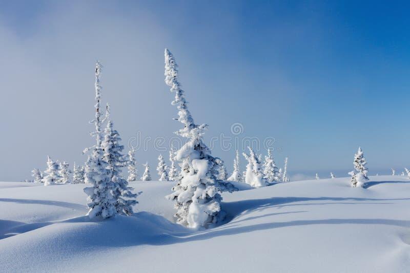 De winter in Siberië royalty-vrije stock afbeeldingen