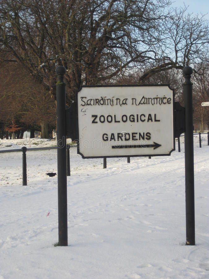 De winter, sneeuw, het park van Dublin, Ierland, Phoenix, dierentuin royalty-vrije stock foto's