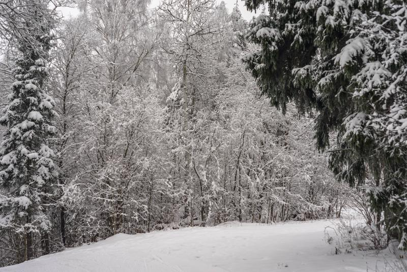 De winter sneeuwlandschap in de Russische koude stock foto
