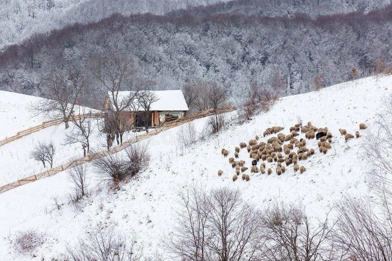 De winter sneeuwlandschap van het transylvanian dorp stock foto