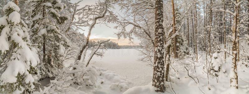 De winter, snow-covered bos op een zonnige dag Het landschap van de winter royalty-vrije stock afbeeldingen