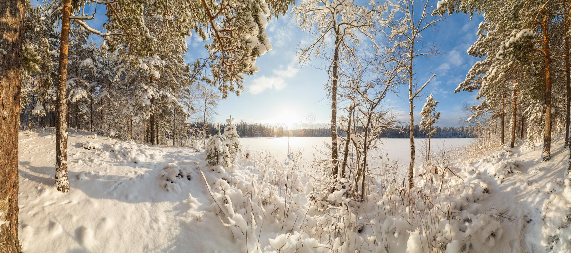 De winter, snow-covered bos op een zonnige dag Het landschap van de winter stock fotografie