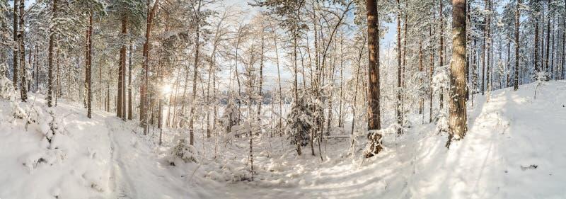 De winter, snow-covered bos op een zonnige dag Het landschap van de winter stock foto