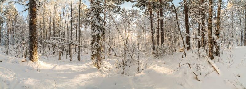 De winter, snow-covered bos op een zonnige dag Het landschap van de winter PA stock afbeeldingen
