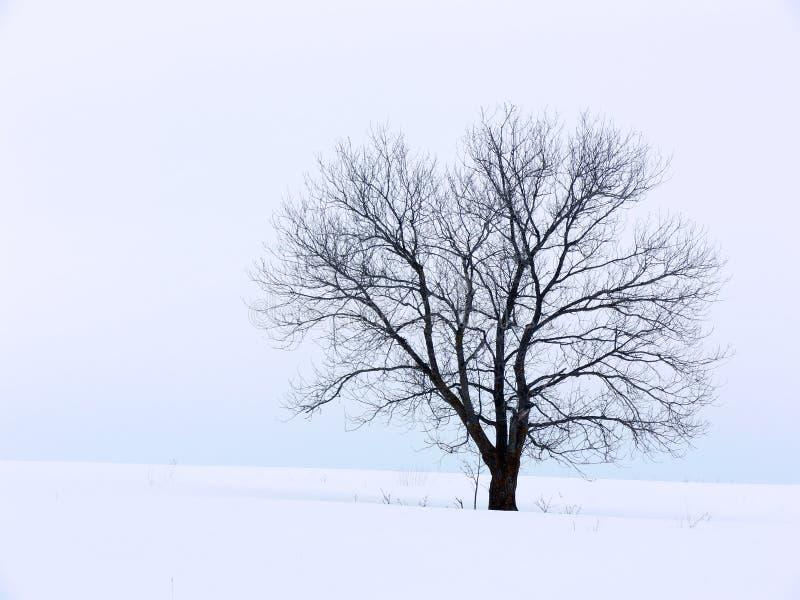 De winter Solitute royalty-vrije stock fotografie
