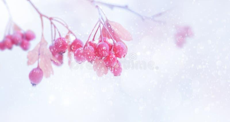 De winter teder magisch bosverhaal Roze en purpere heldere bessen in een sneeuwpark royalty-vrije stock afbeeldingen