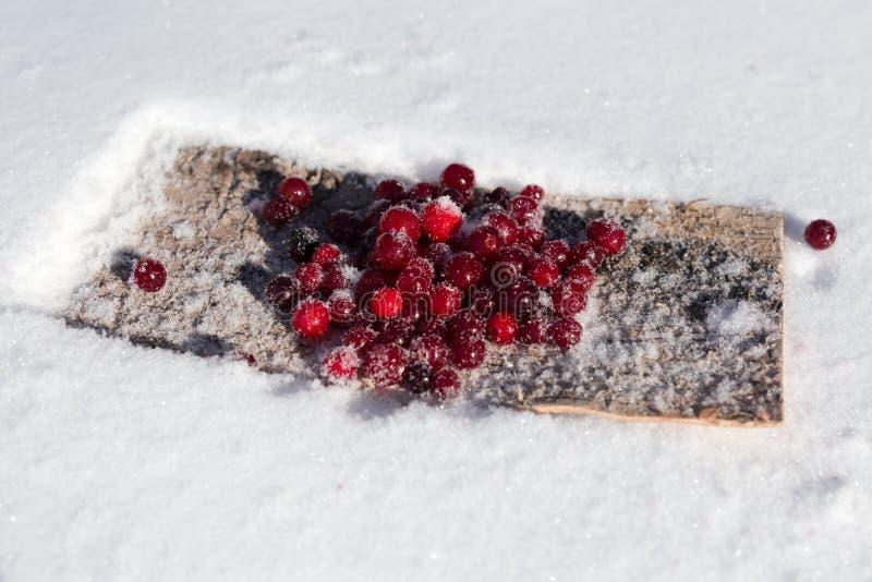 De winter van de bessenamerikaanse veenbes in de sneeuw stock afbeelding