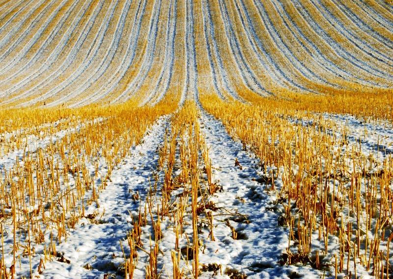 De Winter van de landbouw stock fotografie