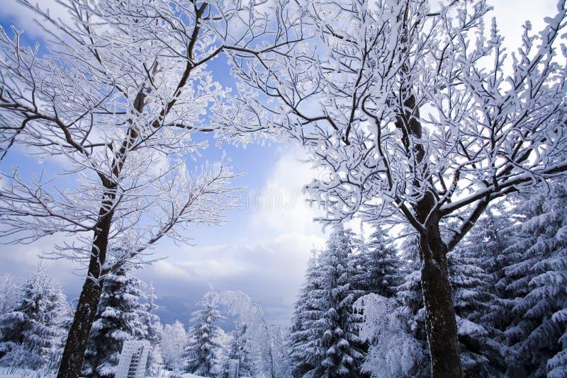 De winter van het landschap royalty-vrije stock foto