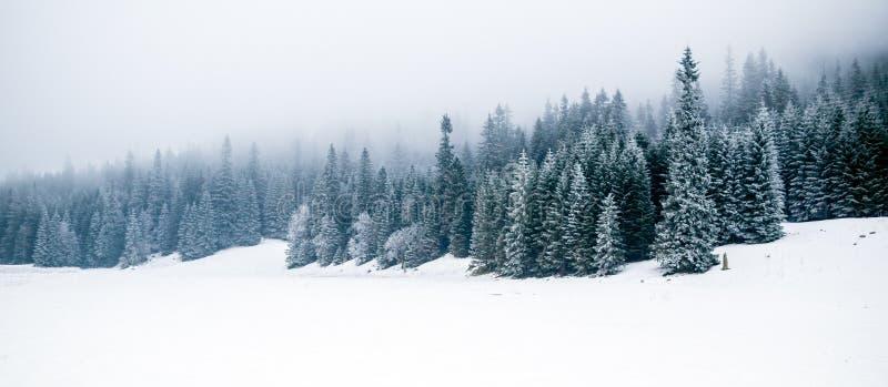 De winter wit bos met sneeuw, Kerstmisachtergrond royalty-vrije stock afbeelding