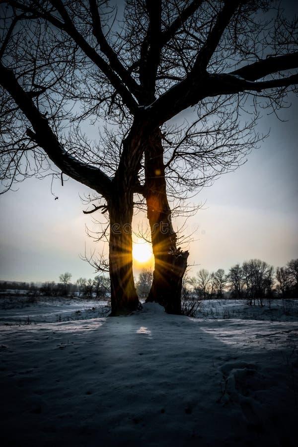 De winter in Yorkshire Sneeuwgebied en avondhemel stock afbeelding