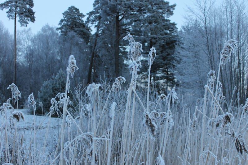 De winter in Zweden stock afbeeldingen