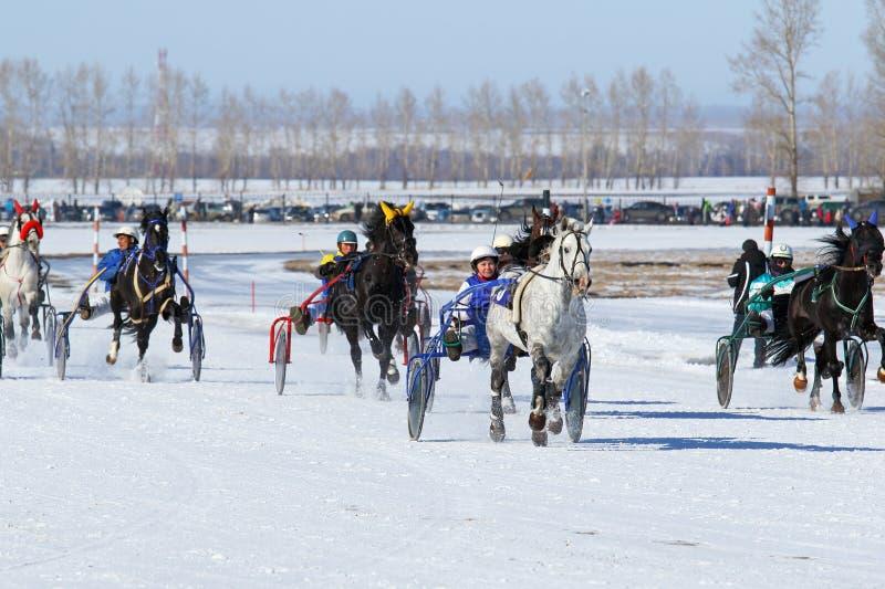 De winteraankomst op paarden royalty-vrije stock afbeeldingen