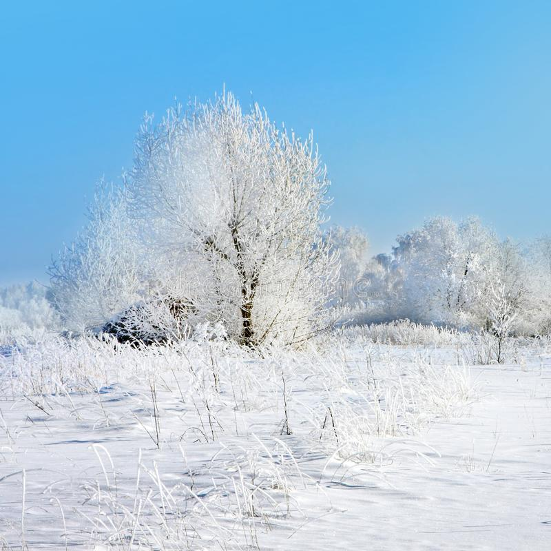 De winteraard, steeg in park stock afbeelding