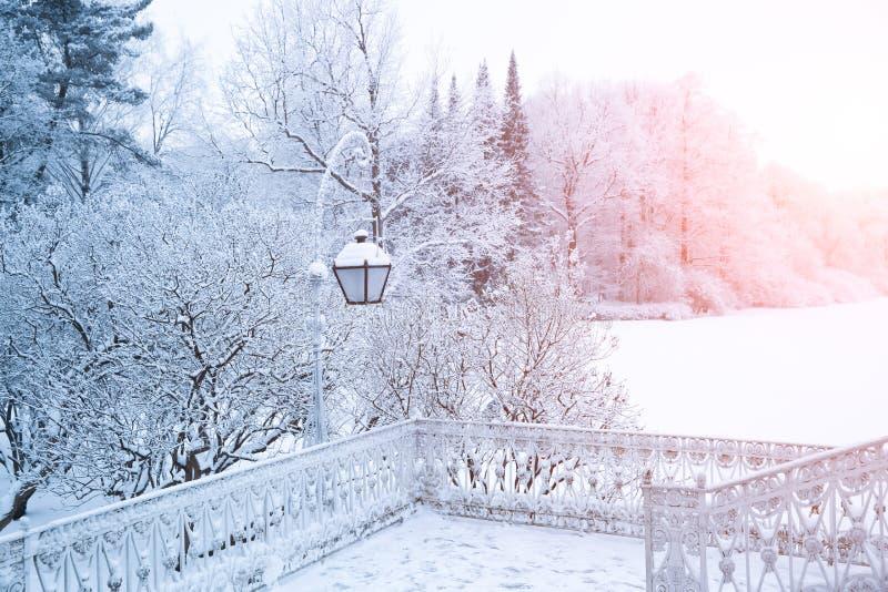 De winterachtergrond, landschap De winterbomen in sprookjesland De winter stock foto