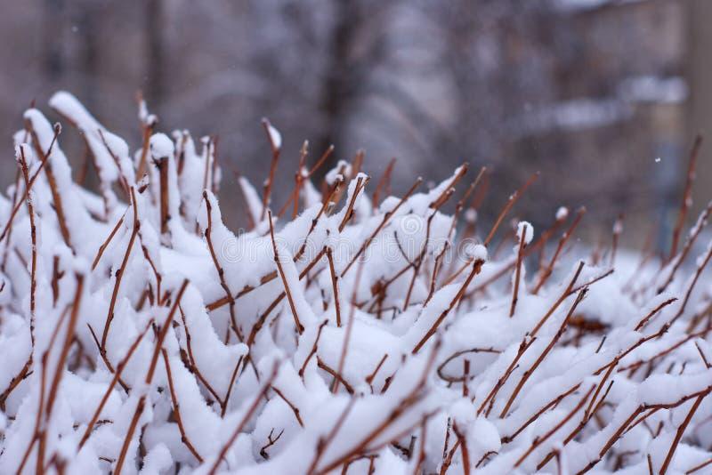 De winterachtergrond met een ijzige struik royalty-vrije stock foto