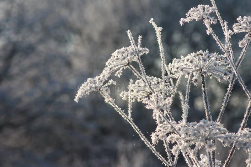 De winterachtergrond van ijs en vorst op installaties stock fotografie