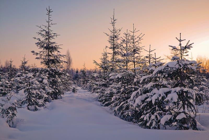 De winteravond in het bos royalty-vrije stock foto's