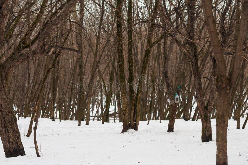 De winterbomen in het park stock afbeeldingen
