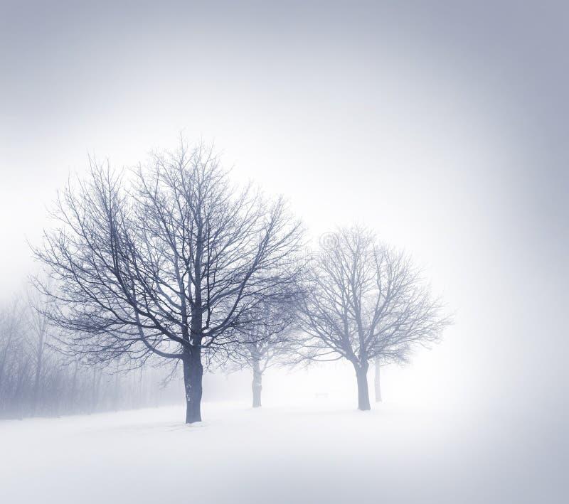 De winterbomen in mist stock afbeeldingen