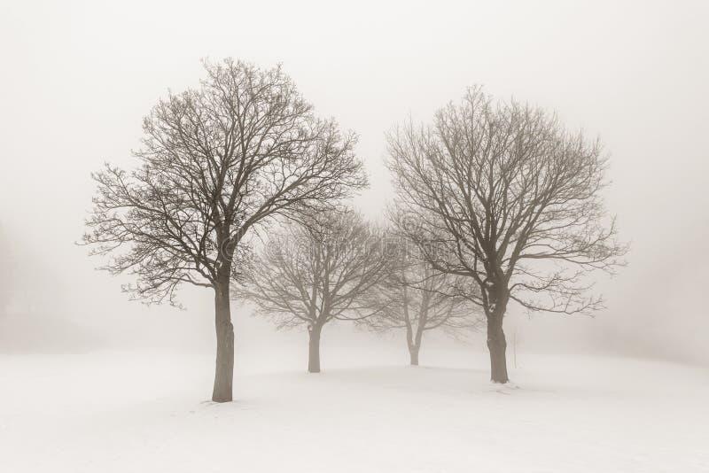 De winterbomen in mist stock afbeelding