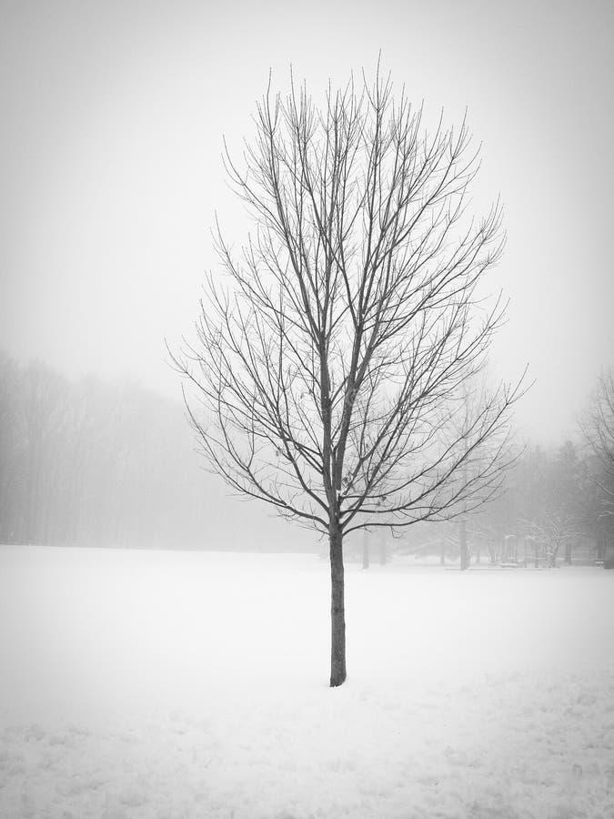 De winterboom stock foto's