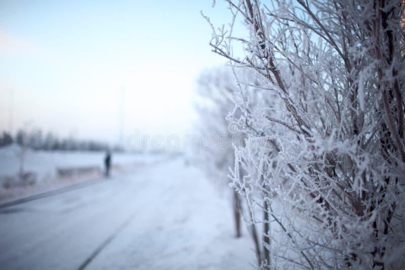 De winterboom met hoar vorst op takken royalty-vrije stock fotografie