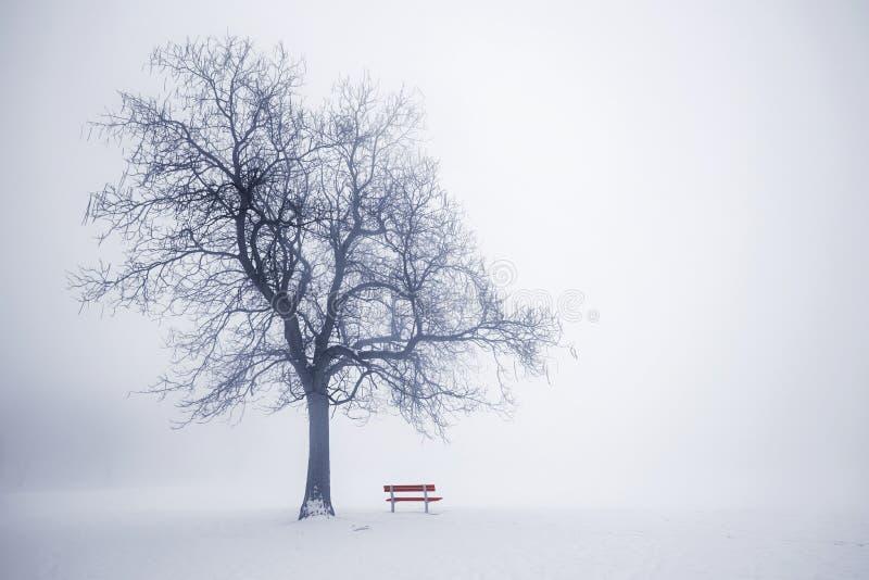De winterboom in mist stock foto