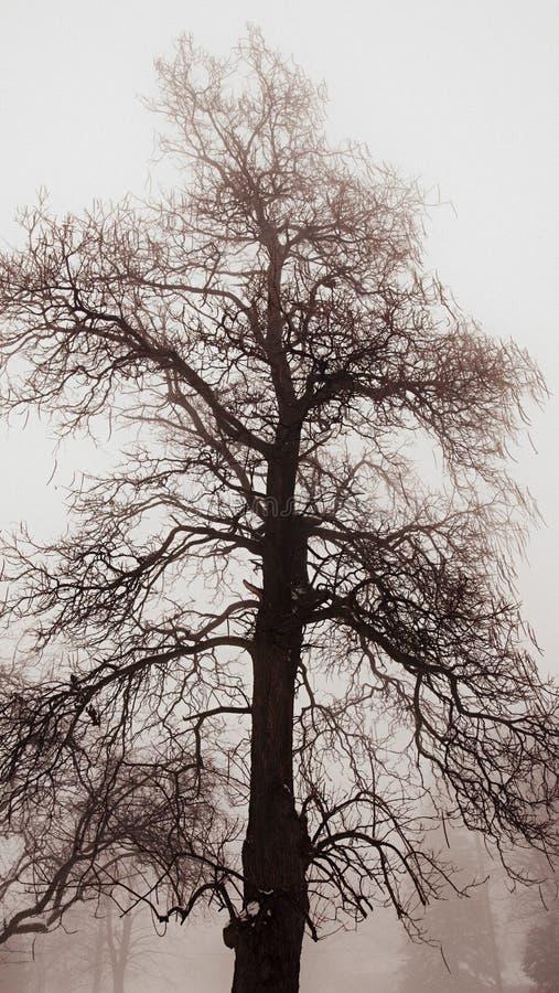 De winterboom in mist royalty-vrije stock foto's
