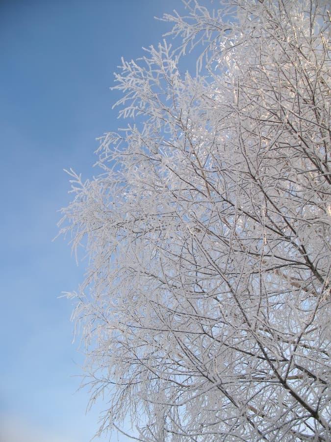 De winterboom onder sneeuw op een blauwe hemelachtergrond stock afbeelding