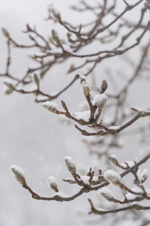 De winterboom, sneeuwdaling, in Toyama, Japan stock foto