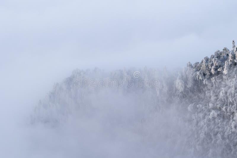 De winterbos in dichte mist stock foto's